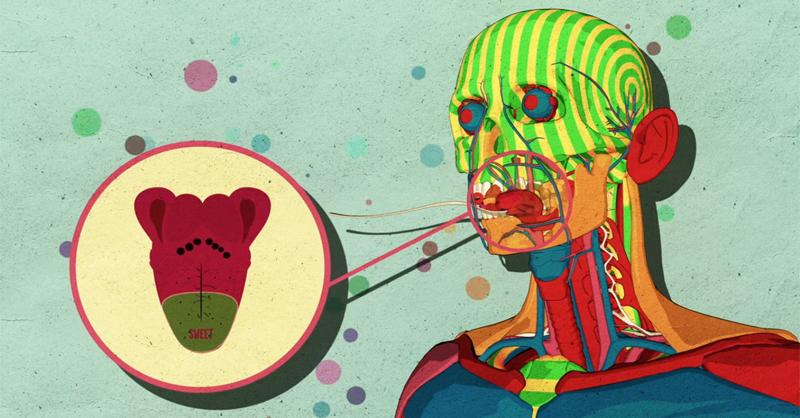 como-el-azucar-afecta-el-cerebro