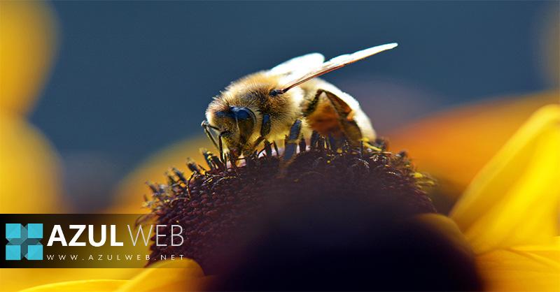 siete-especies-de-abejas-se-encuentran-en-peligro-de-extincion
