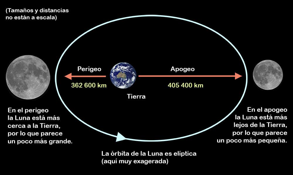 Diagrama explicando el movimiento de la Luna alrededor de la Tierra siguiendo una órbita elíptica y definiendo el apogeo y el perigeo. Los tamaños y las distancias no están a escala. Crédito: Ángel R. López-Sánchez. Imagen de la luna: Paco Bellido.